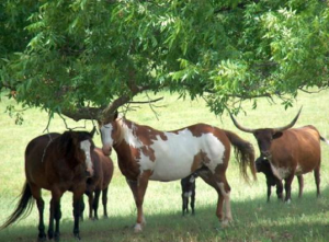 Feds Tell Texas Ranchers the Government Owns Their Land Despite Owners Having Deeds Paying Property Taxes on the Land
